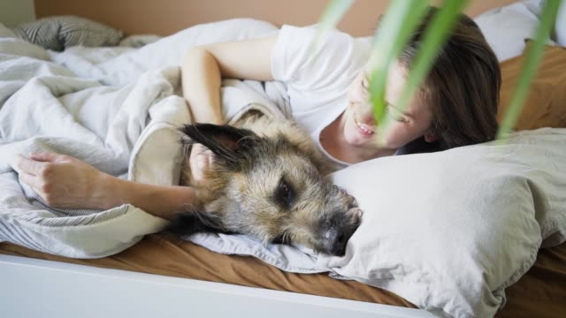 woman strokes grey dog lying in comfortable bed in morning