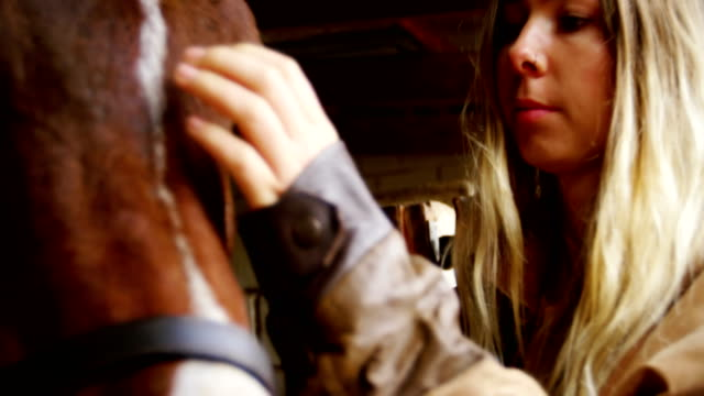 woman stroking a horse in stable 4k - equino video stock e b–roll