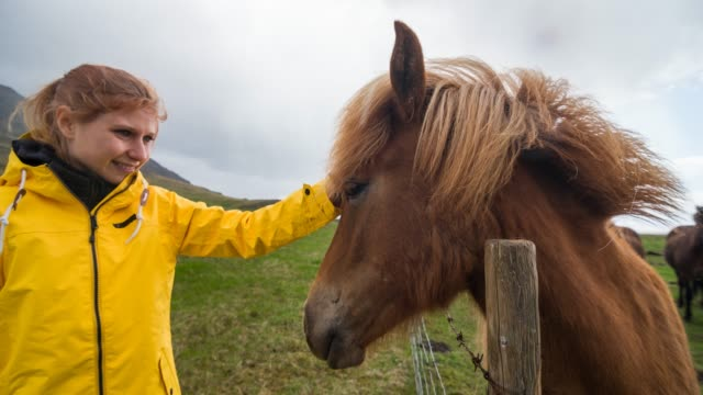Woman stroking a horse in the wild video