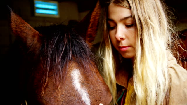 woman stroking horse in stable 4k - equino video stock e b–roll
