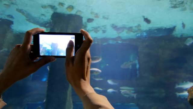 vidéos et rushes de femme a prendre une photo dans l'océanorium - zoo