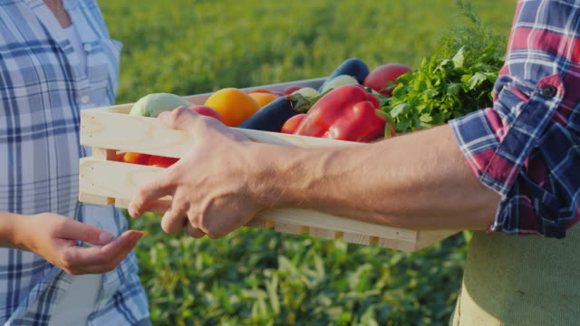 a woman takes a box of vegetables from the farmer's hands. fresh vegetables directly from the field - cestino video stock e b–roll