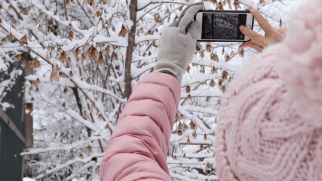 vídeos y material grabado en eventos de stock de mujer toma fotos de teléfono spicato en el entorno del bosque nevado - memorial day weekend