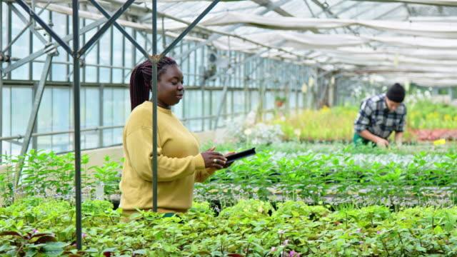 vídeos de stock e filmes b-roll de woman taking inventory of plants at garden center - estufa estrutura feita pelo homem