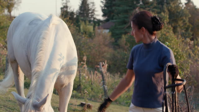 Woman taking off harness of white horse