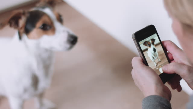 Woman taking picture of dog video