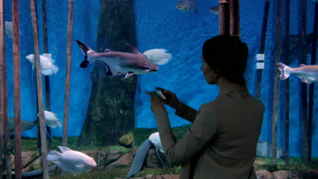 Woman taking pictures of fishes with smartphone