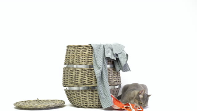 Woman throwing dirty laundry in laundry basket and playful cat Cat series laundry basket stock videos & royalty-free footage