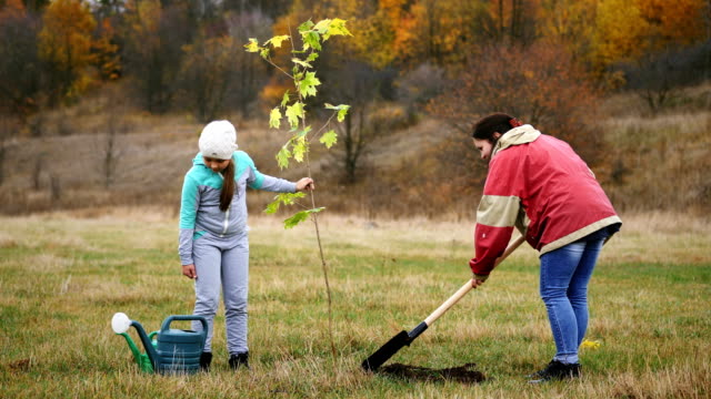 Woman, together with her daughter, plant a tree Young woman, together with her daughter, plant a young maple tree. Against the background of a beautiful autumn landscape. Concept - activity, a healthy lifestyle planting stock videos & royalty-free footage