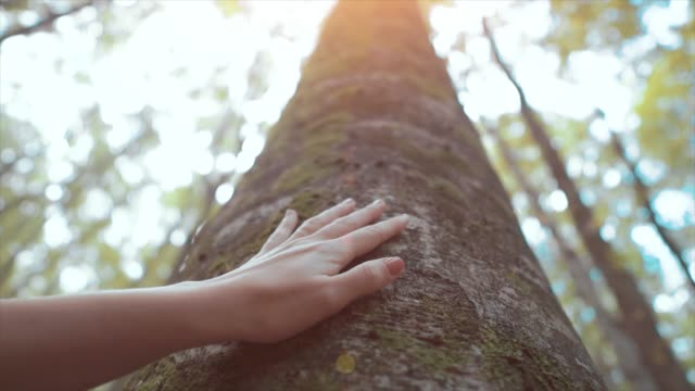 Woman touching aged tree, trunk. Connection with nature, fingers touches autumn tree. Human and nature friendship concept.