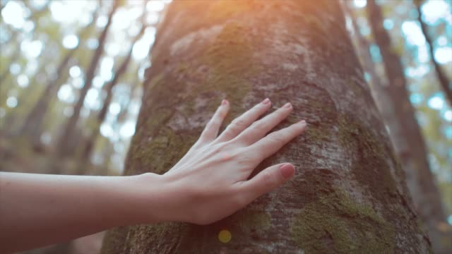 frau berührt alten baum, stamm. verbindung mit der natur, finger berühren herbstbaum. mensch und natur freundschaftskonzept. - berühren stock-videos und b-roll-filmmaterial