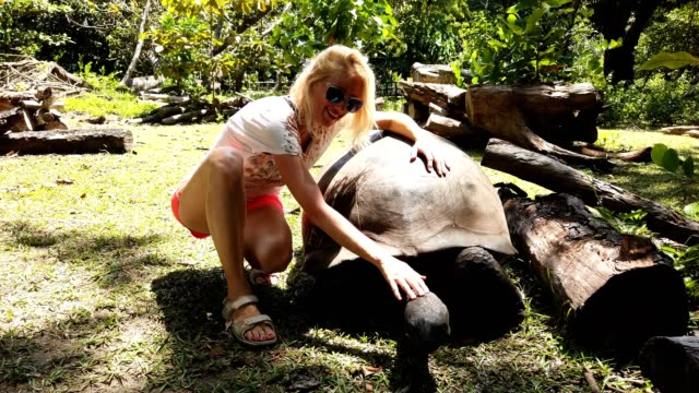 Woman touching giant tortoise Woman touching a Aldabra Giant Tortoise, Aldabrachelys gigantea, a tortoise native to Aldabra atoll. Praslin in Seychelles in Indian Ocean. SLOW MOTION giant tortoise stock videos & royalty-free footage