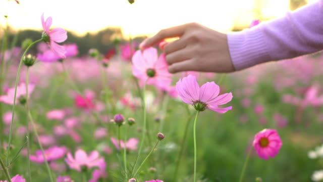 vídeos de stock e filmes b-roll de woman touching the cosmos flower - granadilha