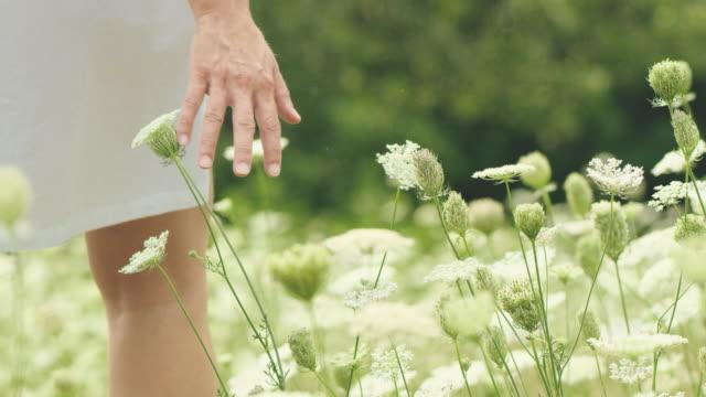 slo mo kvinna röra wildflower i äng - tystnad bildbanksvideor och videomaterial från bakom kulisserna