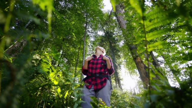 Woman tourist walking in sunny forest Traveller woman enjoying sunny forest in mountain. Camera moving back between fern leaves Low angle view girl in red plaid shirt with backpack standing among green fresh plants and looking around plaid stock videos & royalty-free footage