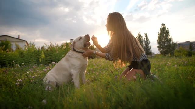 vídeos de stock e filmes b-roll de woman trains her dog outdoor - puxar cabelos
