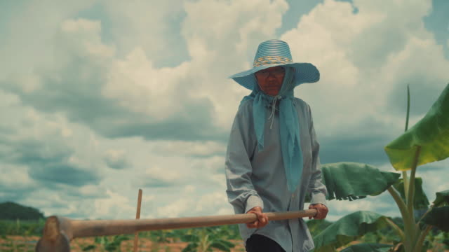 Woman using hoe planting in her farm in the morning