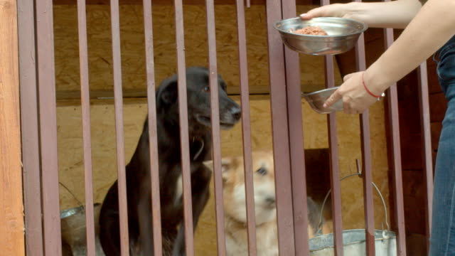 Woman volunteer feeds dogs in a shelter