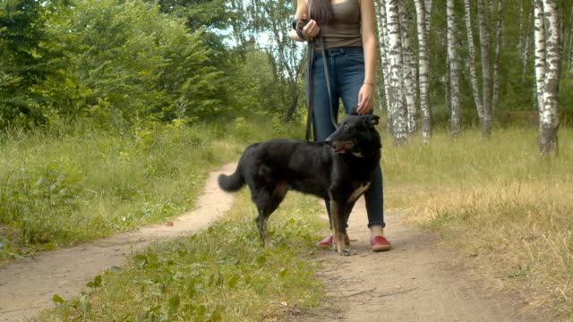 Woman volunteer walking with a dog