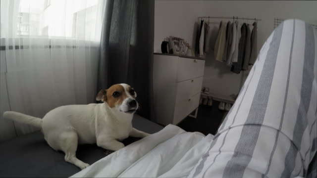 POV of Woman Waking Up in Bed, Petting Dog and Turning off Alarm Clock