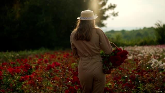 vídeos y material grabado en eventos de stock de mujer caminando en un campo de rosas - espalda humana