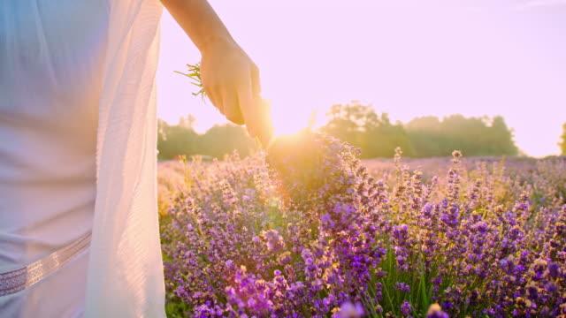 vídeos de stock e filmes b-roll de slo mo woman walking in field of lavender - lavanda planta