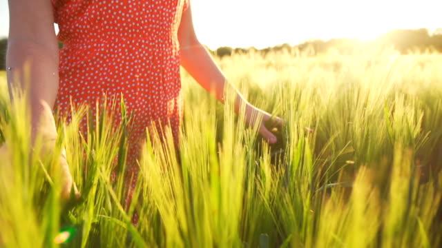HD SUPER SLOW MO: Woman Walking In Field Of Wheat video