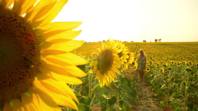 DS Woman walking through a field of sunflowers