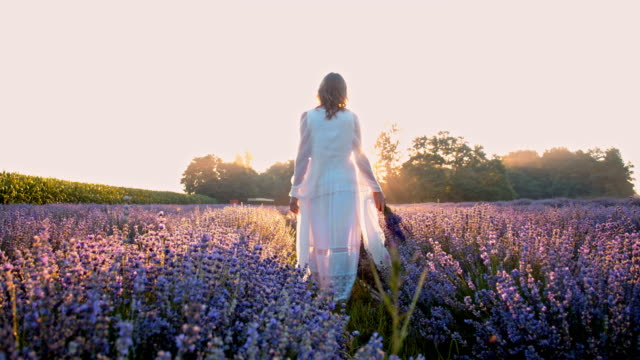 WS Woman walking through field of lavender video