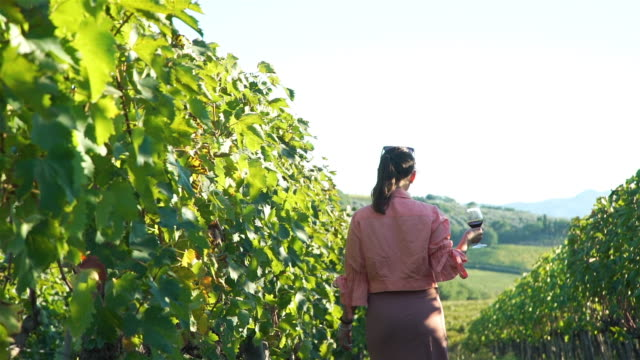 Woman Walking Through Vineyards in Val d`Orcia Back View of Beautiful Woman with Glass of Red Wine Walking Through Vineyards in Val d`Orcia. Tuscay, Italy. Slow Motion. Vineyard Agriculture and Wine Tasting Concept winetasting stock videos & royalty-free footage