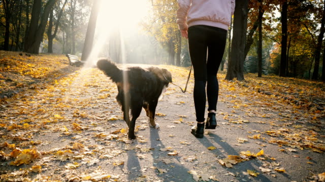 woman walking with dog in park in autumn - attività del fine settimana video stock e b–roll