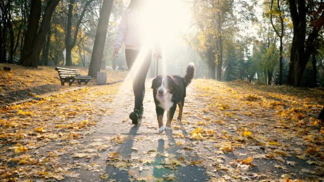 stockvideo's en b-roll-footage met vrouw wandelen met de hond in park in het najaar - teenager animal