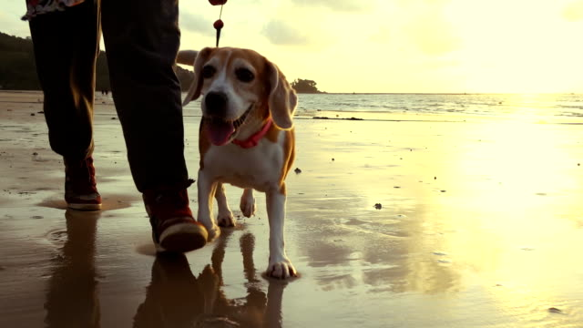 Woman Walking with dog on the beach slow motion video