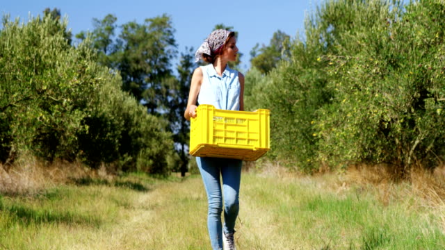 woman walking with harvested olives in crate 4k - agricoltrice video stock e b–roll