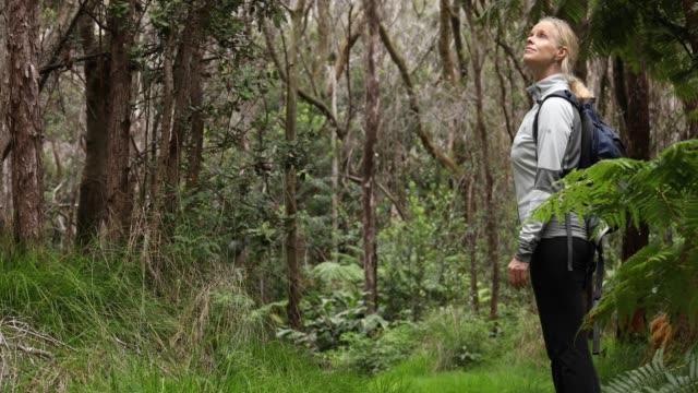 Woman walks along green jungle trail, wearing backpack Hawaii Volcanoes National Park, Big Island, Hawaii pacific islands stock videos & royalty-free footage