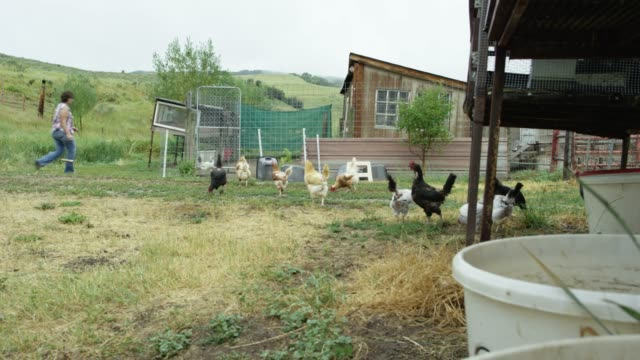 A Woman Walks into a Chicken Coop