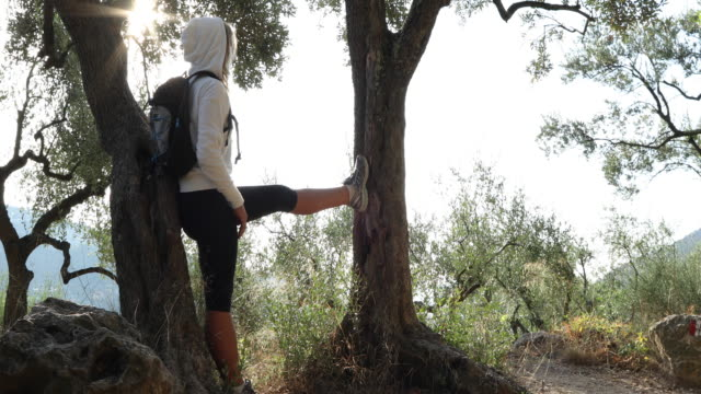 Woman walks through olive grove at sunrise She stems between trees and looks off to distant scene, Liguria pedal pushers stock videos & royalty-free footage