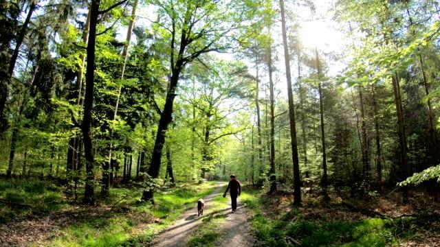 kvinnan promenader med hunden i skogen, retriever, naturepark spessart, 4k - liten skog bildbanksvideor och videomaterial från bakom kulisserna