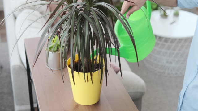 Woman watering houseplant