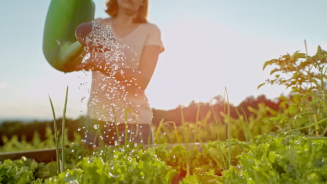 SLO MO Woman watering the garden Super slow motion shot of a mid adult woman watering with a watering can in a garden. horticulture stock videos & royalty-free footage