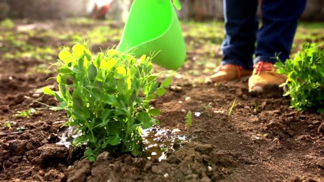 Woman watering vegetable video