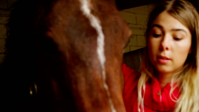 woman wearing rein to horse in stable 4k - equino video stock e b–roll