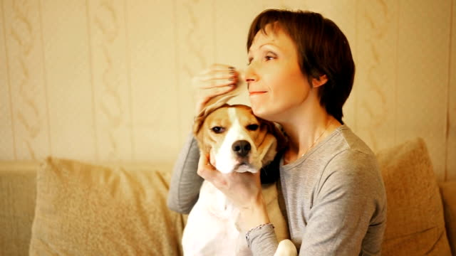 woman with beagle dog, sitting on the sofa indoor and wipes by his ears tears playfully. video