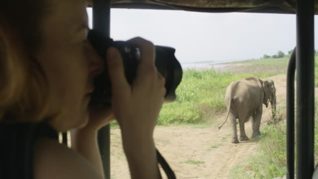 MS Woman with camera photographing elephant from safari vehicle,Sri Lanka video