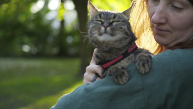 Woman with cat in park Young woman with cat in park. Close-up girl portrait holding cat on hands at blurred background forest in sun shine leash stock videos & royalty-free footage