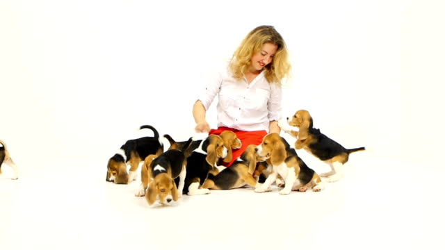 woman with cute beagle puppy on a white on studio. Slow motion video