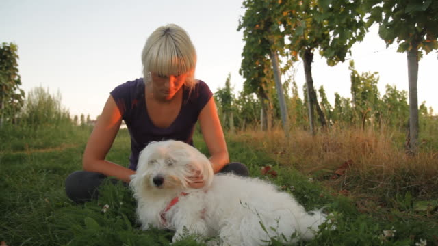 dolly hd: donna con cane in un vigneto - bichon frisé video stock e b–roll