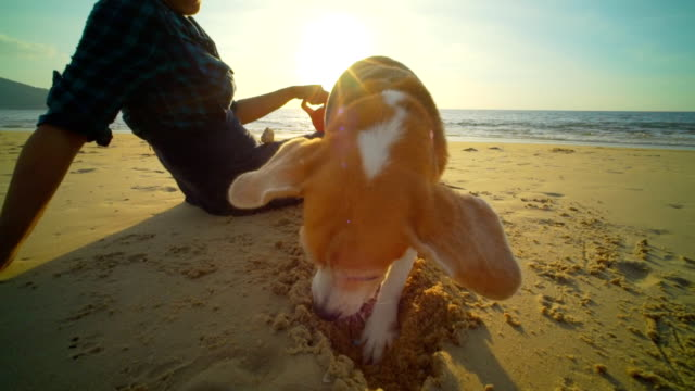 vídeos de stock e filmes b-roll de woman with dog on the beach slow motion - dog food