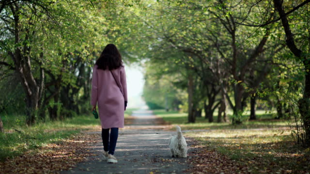 woman with dog walk in the autumn park. west highland white terrier - terrier video stock e b–roll