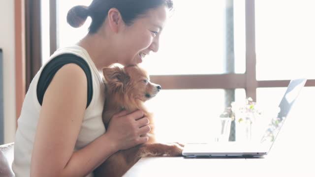 自宅で働く犬を持つ女性 - パソコン 日本人点の映像素材/bロール
